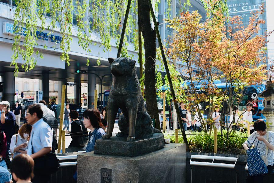 Cosa vedere a Tokyo Giappone: Statua Hachiko