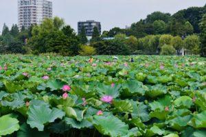 Ueno Park (Quartiere di Ueno)   Cosa fare e vedere a Tokyo
