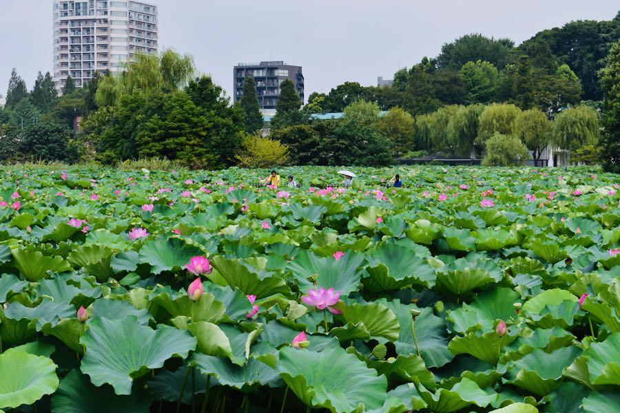 Cosa vedere a Tokyo Giappone: Ueno Park