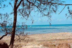 Cosa fare e vedere a Zanzibar: Prison Island