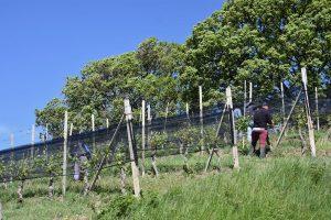 La Morra Lavoro nelle vigne | Cosa vedere nelle Langhe