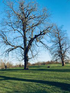 Hyde Park | Cosa vedere a Londra