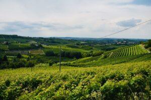 Panorama - Coazzolo   Langhe e Monferrato