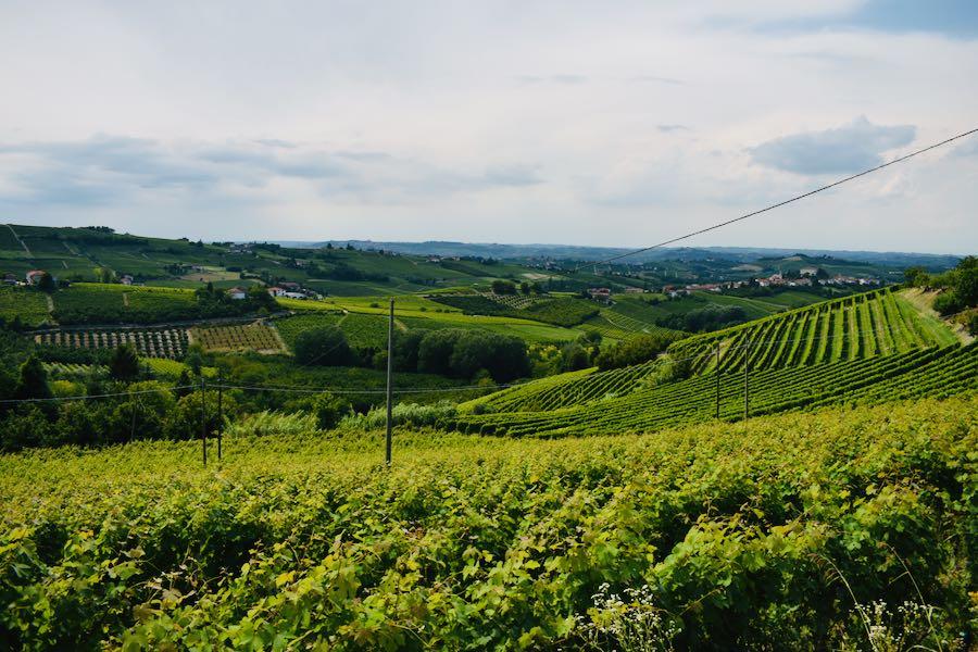 Langhe e Monferrato: Coazzolo