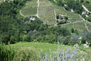 Versi In Vigna - Castiglione Tinella | Hotel con piscina nelle Langhe
