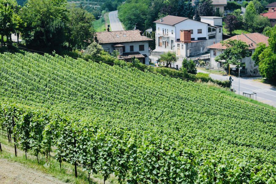 Langhe e Monferrato: Vigne Neive