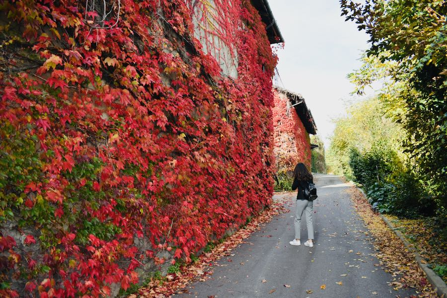 Foliage   Cocconato