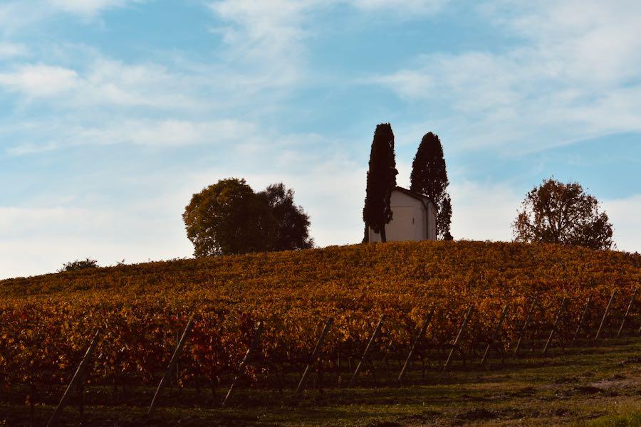 Pieve Madonna Della Neve | Cocconato D'Asti