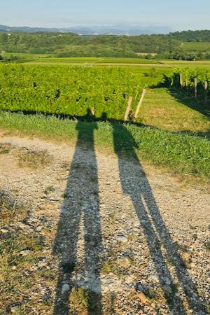 Ombre nei vigneti | Gigante Wine & Welcome (Corno Di Rosazzo)